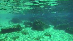 与鱼学校的水下的生活在4k的 影视素材