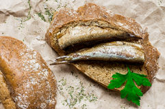 与鱼熏制的西鲱的开胃菜 库存图片