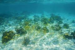 与鱼珊瑚和浅滩的水下的风景  免版税库存照片