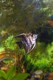 与鱼的水族馆。 绿色主题 免版税库存照片