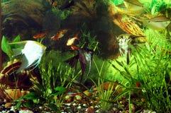 与鱼的水族馆。 绿色主题 免版税图库摄影