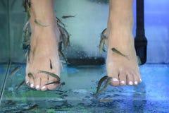 与鱼的脚按摩在水族馆特写镜头 免版税图库摄影