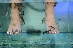 与鱼的脚按摩在水族馆特写镜头 图库摄影