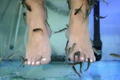 与鱼的脚按摩在水族馆特写镜头 库存照片
