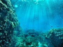 与鱼的水下的峭壁边 免版税库存照片