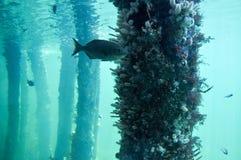 与鱼的水下的礁石 库存照片