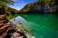 与鱼-普利特维采湖群国家公园- Plitvice Jezara,克罗地亚的水晶水 免版税库存照片
