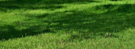 与鲜绿色的草的美好的背景在草坪 库存照片