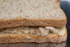 与鲜美甜猪肉绣花丝绒的特写镜头可口泰国早餐健康新鲜面包 免版税图库摄影