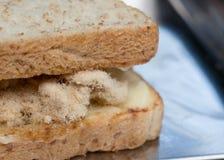 与鲜美甜猪肉绣花丝绒的特写镜头可口泰国早餐健康新鲜面包 免版税库存照片