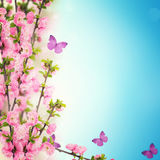 与鲜花的明信片和您的文本的空的地方 免版税库存照片