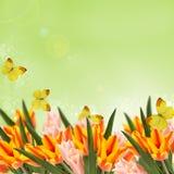 与鲜花郁金香的明信片和您的te的空的地方 库存图片