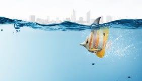 与鲨鱼轻碰的异乎寻常的鱼 免版税库存图片