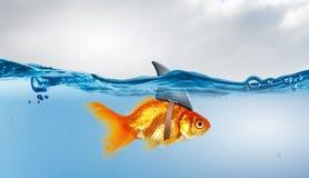 与鲨鱼轻碰的金鱼 混合画法 库存照片