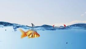 与鲨鱼轻碰的金鱼 混合画法 免版税库存照片