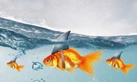 与鲨鱼轻碰的金鱼 混合画法 免版税图库摄影