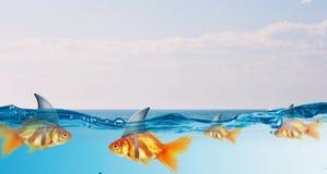 与鲨鱼轻碰的金鱼 混合画法 图库摄影