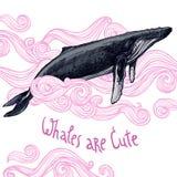 与鲸鱼的逗人喜爱的例证 免版税库存照片