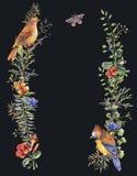 与鸟、冷杉分支、莓果、飞蛾、花和分支的水彩葡萄酒花卉森林花圈 皇族释放例证