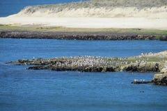 与鸟和白色峭壁的海角在海洋 图库摄影