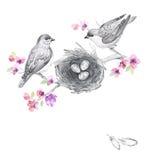 与鸟和花的花卉水彩背景 免版税库存照片