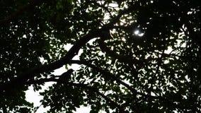 与鸟和阳光的树剪影 图库摄影