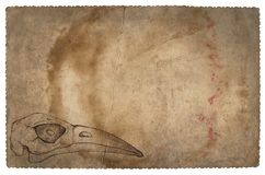 与鸟头骨的老葡萄酒纸 难看的东西背景 库存照片