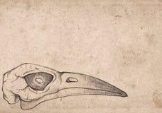与鸟头骨的老葡萄酒纸 难看的东西背景 图库摄影
