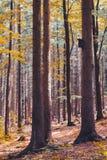 与鸟房子的五颜六色的喜怒无常的秋天森林风景树的 免版税图库摄影