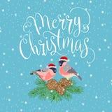 与鸟的圣诞快乐 库存图片