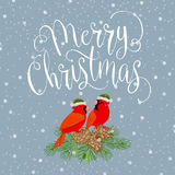 与鸟的圣诞快乐 图库摄影