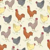 与鸟的无缝的样式-雄鸡和鸡和草 库存图片