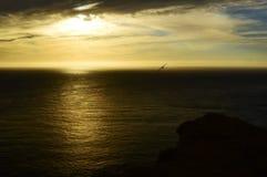 与鸟的日落 免版税库存图片