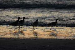 与鸟的海洋日落 免版税库存照片