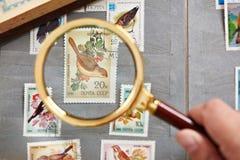与鸟的邮票在册页的放大器下 库存照片