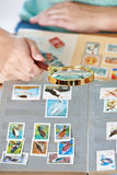 与鸟的邮票在册页的放大器下 免版税库存图片