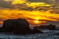 与鸟的金黄橙色日落 免版税图库摄影