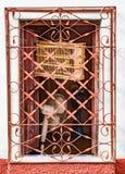 与鸟笼的在桔子后的开窗口和爱好者绘了金属g 免版税图库摄影