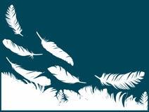 与鸟羽毛的背景 库存图片
