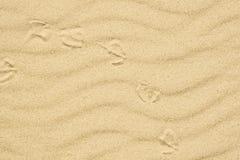 与鸟脚印的沙子纹理  图库摄影