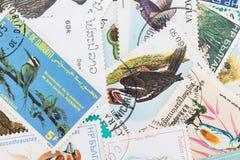 与鸟题材的邮票 免版税图库摄影