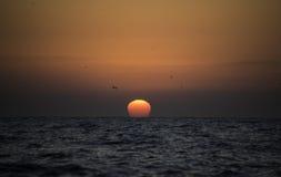 与鸟飞行的日出东海岸南非 库存照片