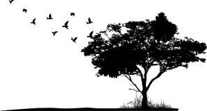 与鸟飞行的树剪影 库存照片