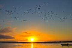 与鸟飞行的河日落 免版税库存图片