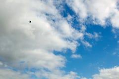 与鸟飞行的美丽的蓝天 免版税库存图片