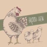 与鸡的葡萄酒设计 日愉快的母亲 库存图片