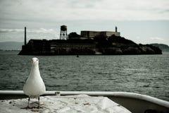 与鸥的Alcatraz 免版税库存照片