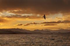 与鸥飞行的日落 库存照片
