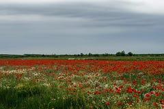 与鸦片和春黄菊10的风景 库存图片