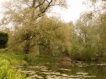 与鸭子春天l的一个可爱的乡下公园河小河场面 库存图片